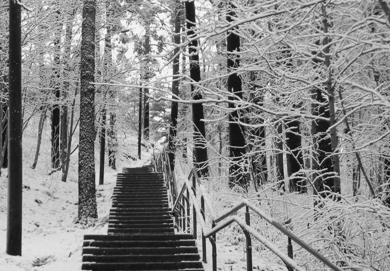 Pyynikin Näkötornin portaat