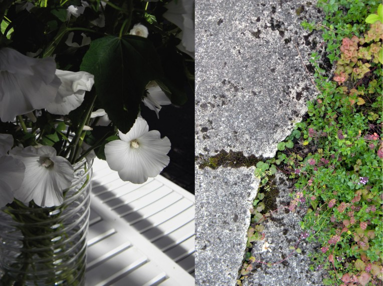 Kangasajuruoho ja puutarhakalusteet