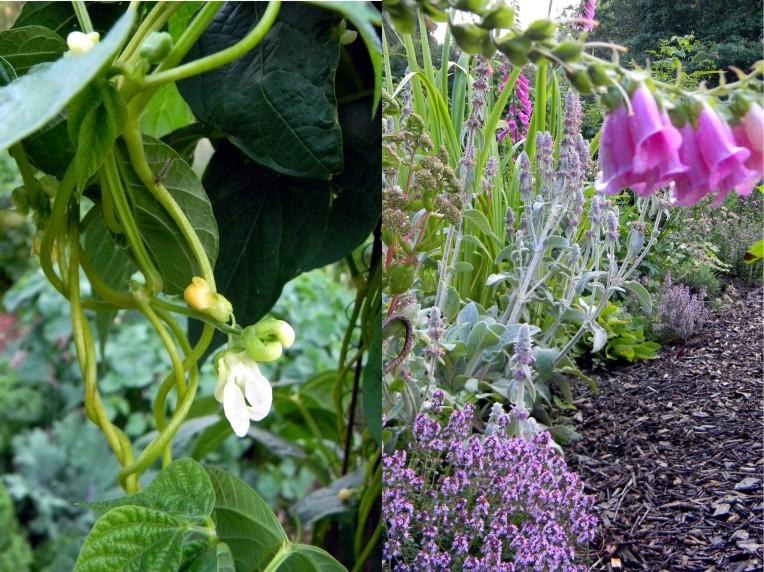 kasvimaan kasveja
