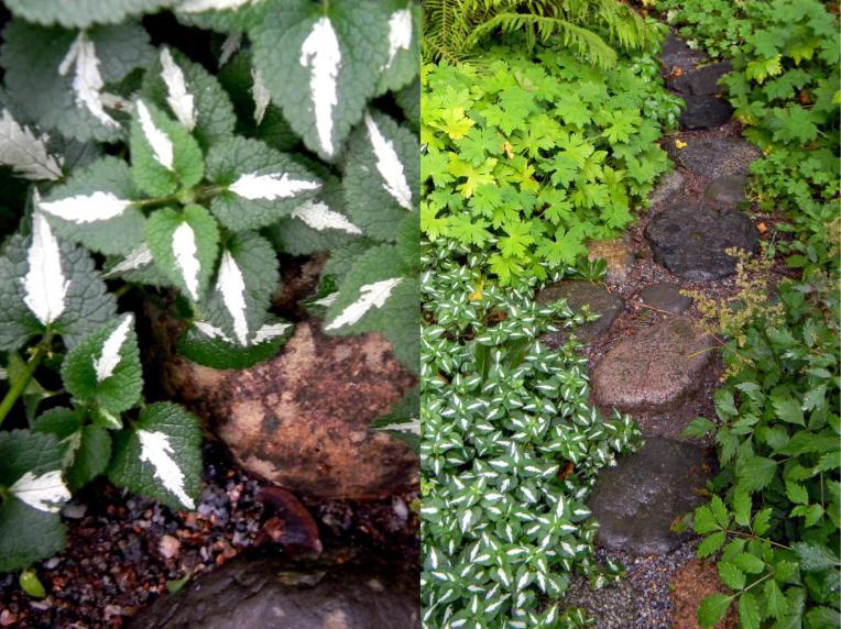 Maanpeittokasveja ja kivipolku