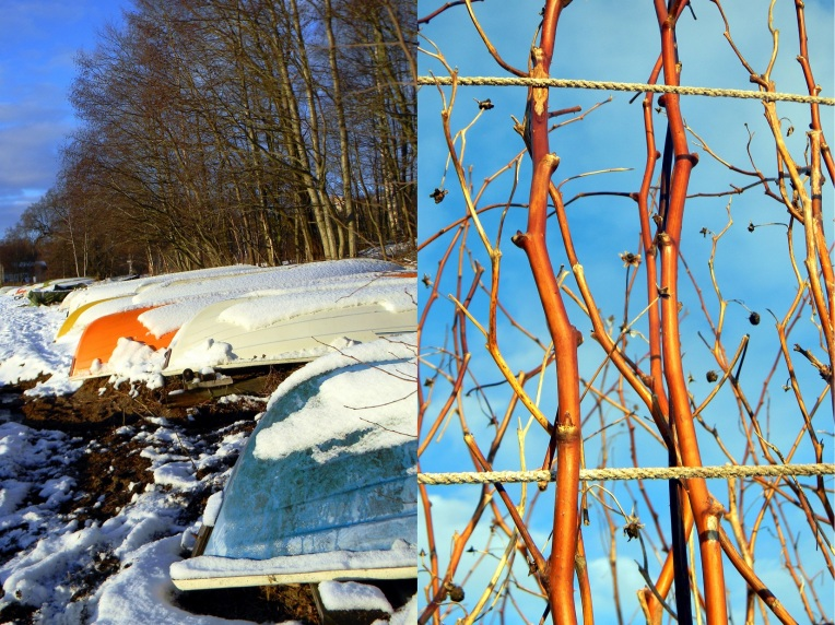 Vadelma ja karhunvatukka talvella