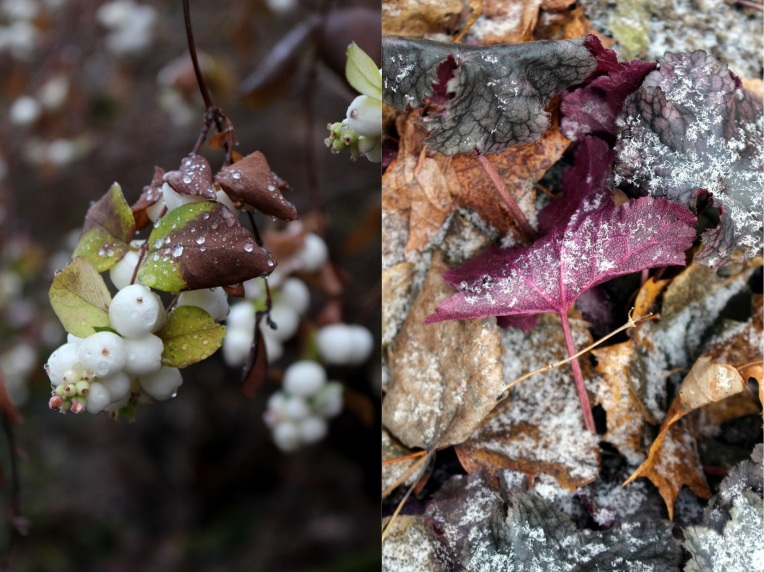 Lumimarja ja maanpeittokasvit