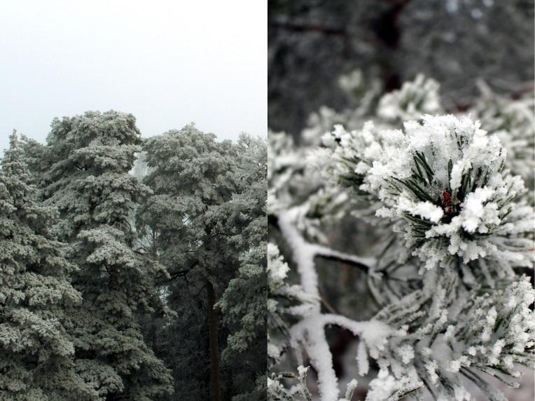 Pyynikki Finland